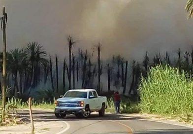 Casi 72 hectáreas las afectadas por incendio en palmar en San Ignacio