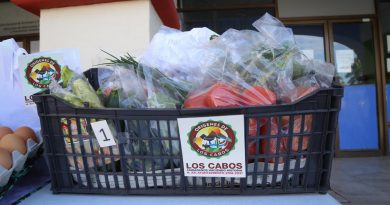 """¡De la huerta a tu hogar! En beneficio de productores locales, Gobierno de Armida Castro impulsa programa """"Los Cabos Consume Local"""""""