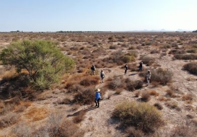 Realizan jornada de búsqueda de personas en zona norte de BCS