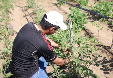 Expertos reflexionarán en torno a la agricultura sustentable en zonas áridas