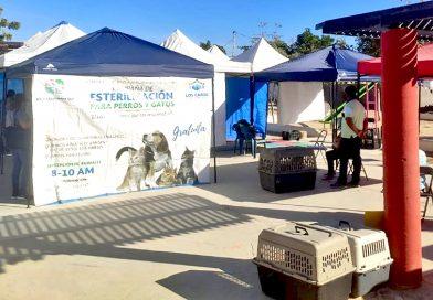 Realiza Salud Estatal esterilización canina en Cabo San Lucas